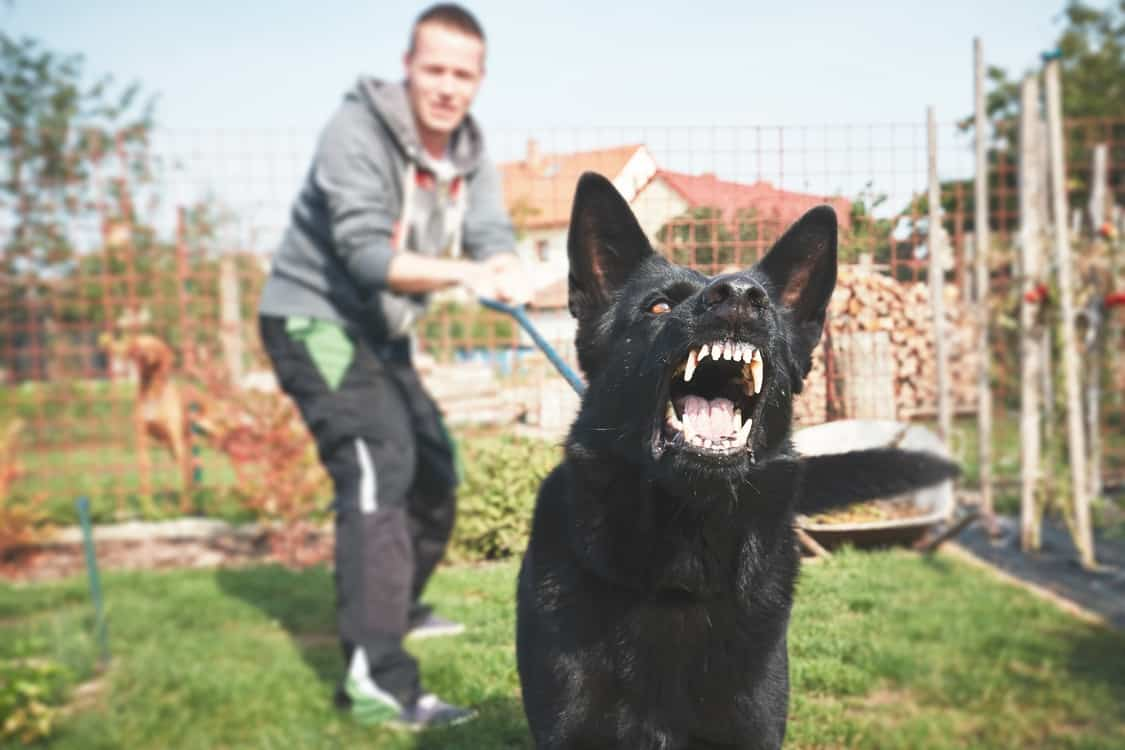 Aggressive barking dog under training